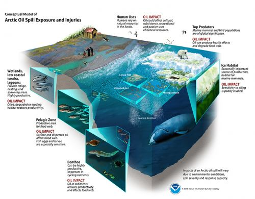 Graphic of a cutaway section of the ocean.