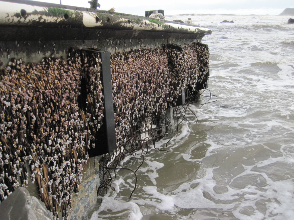 Image of a dock that crossed the Pacific after the 2011 tsunami in Japan.