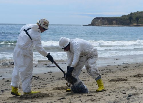 Two people shoveling oily vegetation into a bag on the beach.