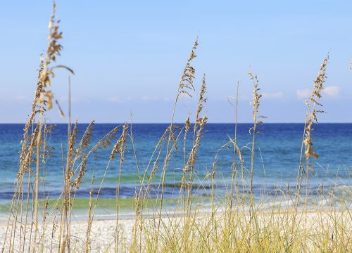 Beach grasses with water in the background.