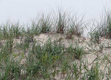 Sand dunes with grass.