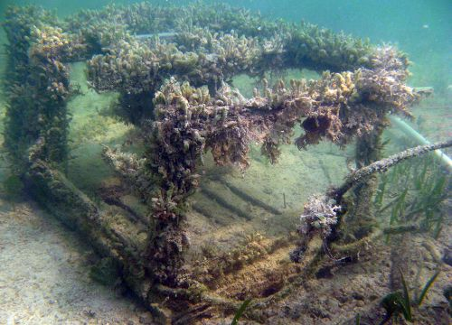 Broken derelict trap on seafloor with vegetation.