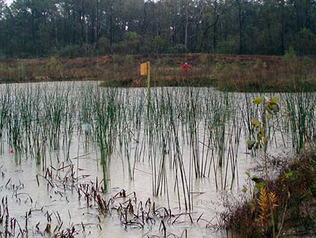 Natural Resource Damage Assessment Completed