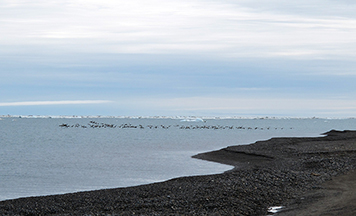 A flock of birds are visible flying above the Beaufort Sea.