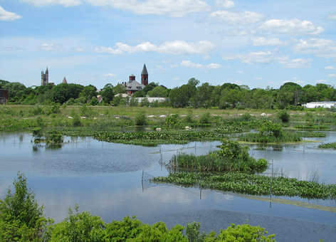 New freshwater marsh with the town of Fairhaven, Mass., in the background.
