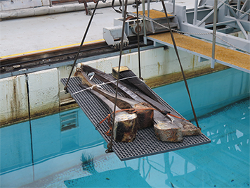 Segments of baleen anchored to gum tissue hanging over a water tank.
