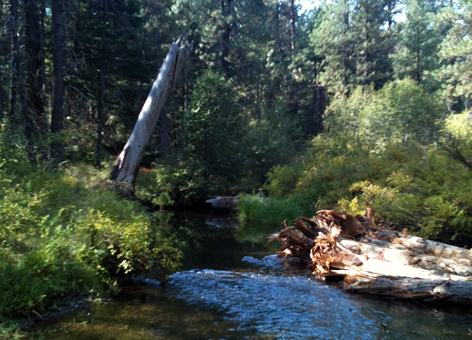 Beaver Creek in Oregon with large pieces of wood added to stream margins.