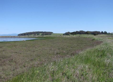 Degraded marsh area on edge of bay.