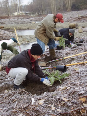 Volunteers plant ferns at a restoration site in Commencement Bay. (NOAA)
