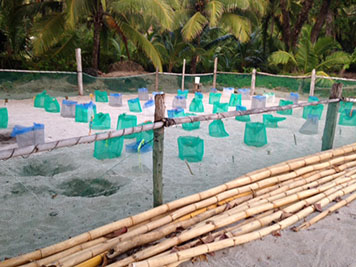 Rows of nets cover sandy sea turtle nests, surrounded by fencing.