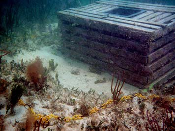 A derelict stone crab pot rests on the bottom of the ocean.