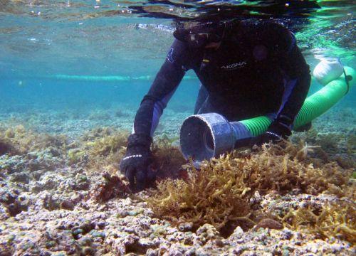 Diver gathering algae into Super Sucker's vacuum hose.