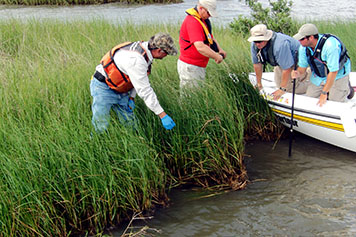 People in boat and in marsh assessing oiling impacts.