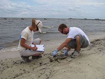 Two scientists measure a dead Kemp's ridley sea turtle on a Mississippi beach.