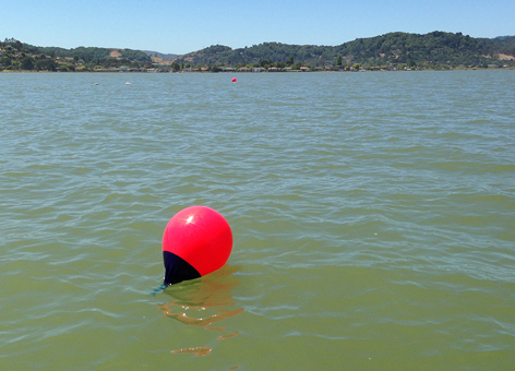 Bright red buoys floating on a bay.