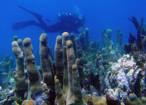 A diver explores coral in the Florida Keys National Marine Sanctuary.