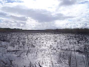 The marsh with burned roseau cane (phragmites).