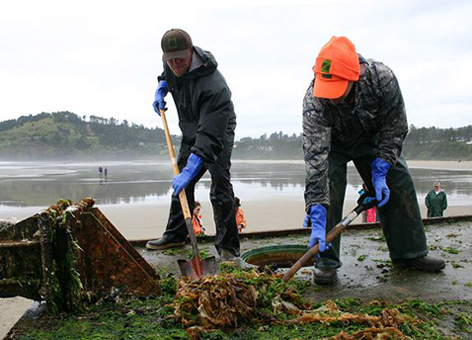 Workers scrape marine organisms from the tsunami dock at Agate Beach, Oregon.