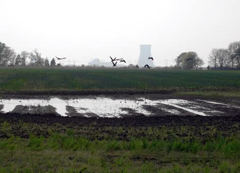 Birds flying over flooded fields with a nuclear plant in the background.