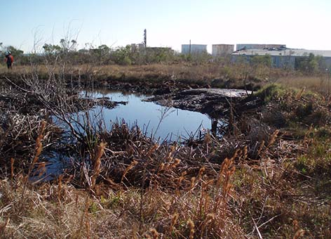 Oil pit at Malone Service Company waste site.