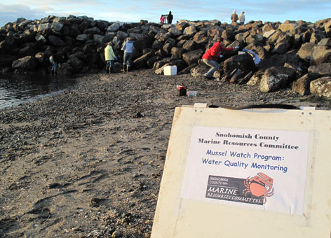 Volunteers sample mussels at a rocky beach with a sign in the foreground.