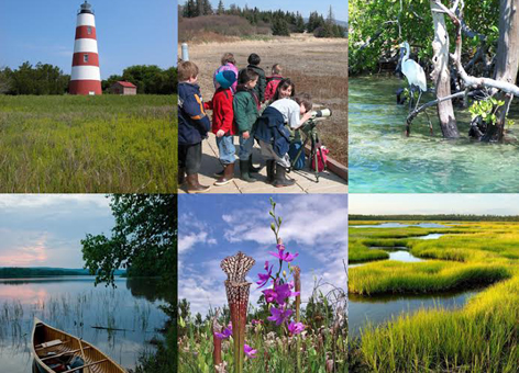 Collage: lighthouse, viewing wildlife, heron, canoe in water, flowers, wetlands