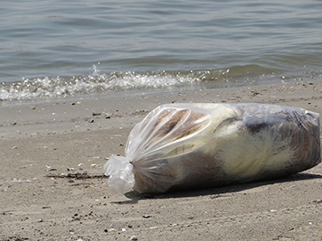 Bag of oiled waste on a beach.