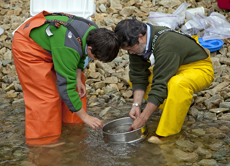 Two people wearing chest waders sift for marine life in shallow rocky waters.