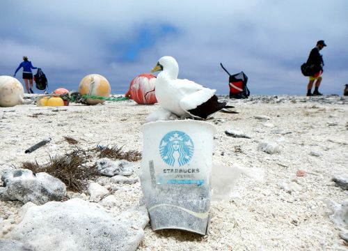 A Starbucks coffee cup on a sandy beach by a seabird and people picking up trash