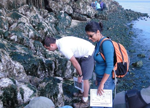 Two people closely examining rocks and seaweed on a shoreline.