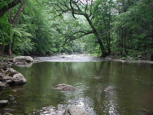 A river lined with trees. Image credit: U.S. Geological Survey.