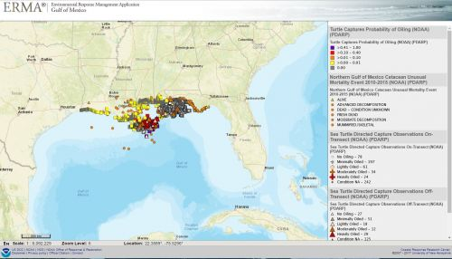 ERMA map of sea turtles in the Gulf. Image credit: NOAA.