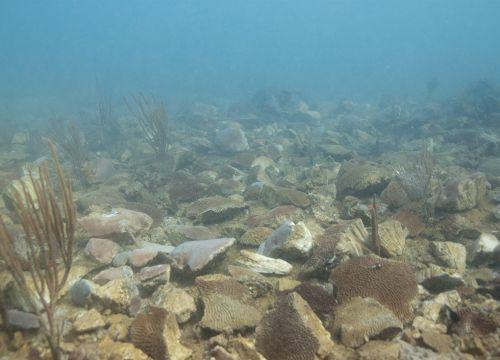 Broken coral on ocean floor.