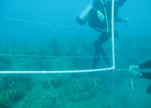 Scuba diver underwater with string and plastic pipe grid.
