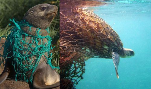 How Marine Debris is Impacting Marine Animals