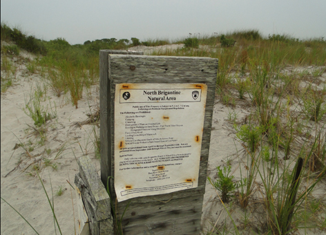 "Weathered sign, ""reading North Brigantine Natural Area,"" among beach grasses."