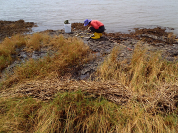 Female biologist crouches over a quadrant at the water's edge in a marsh.