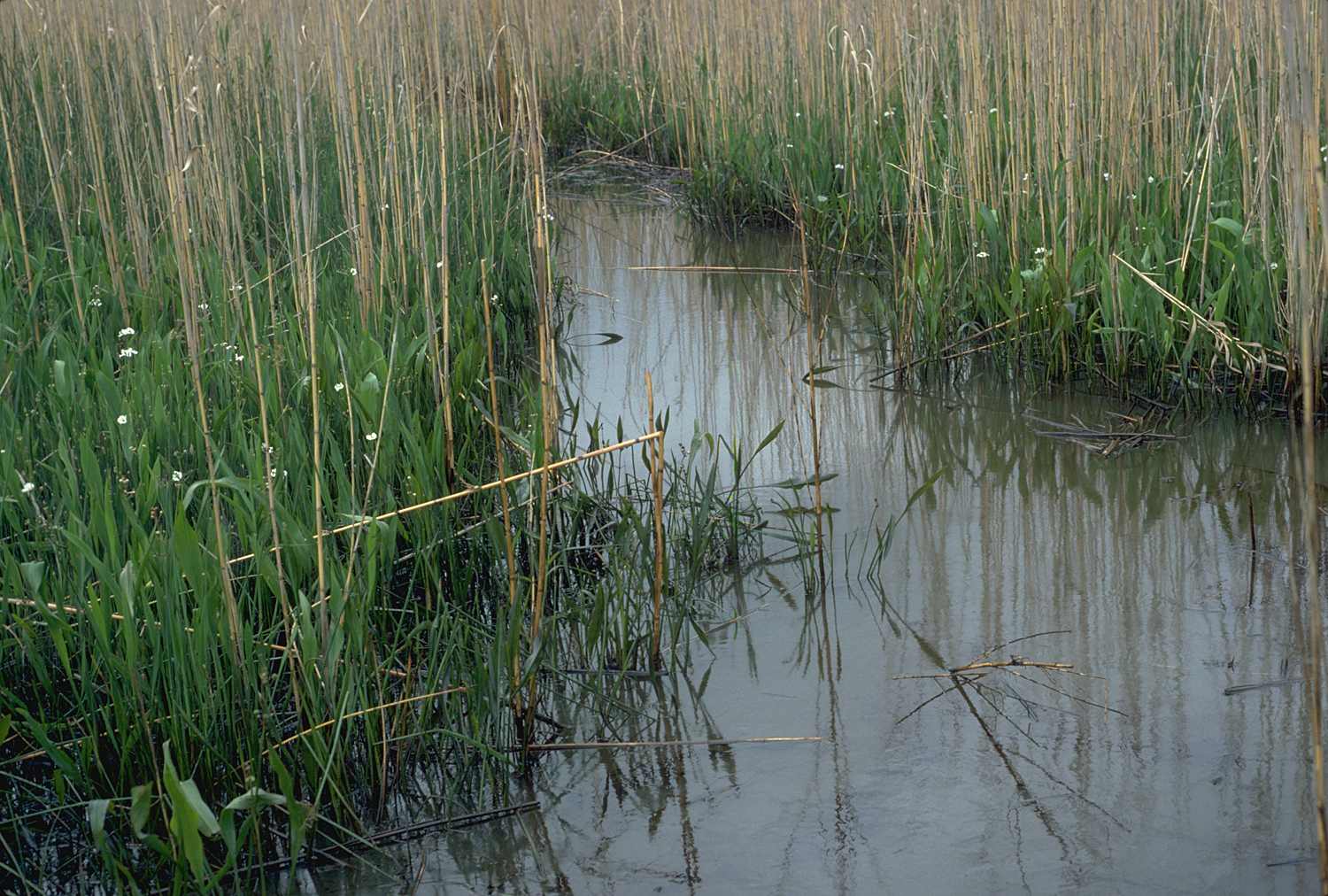 Photo: Marsh grasses.
