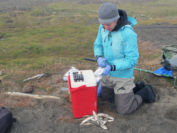 Woman scientist collects fluid from a fish next to cooler with vials.