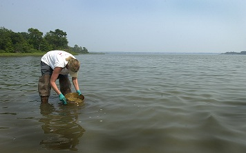 Photo: A scientist takes a water sample.