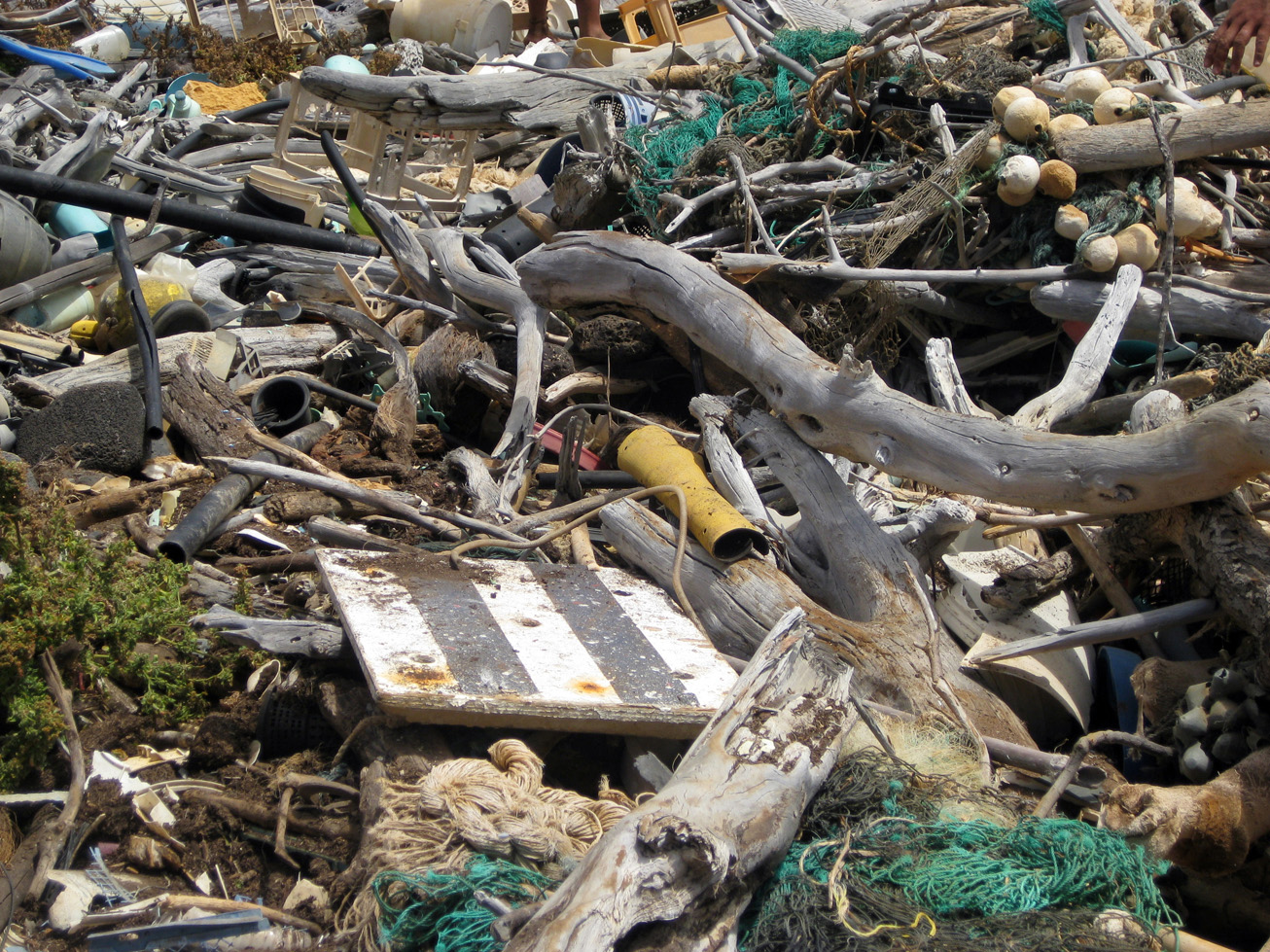 Marine debris and driftwood on Hawaii beach.