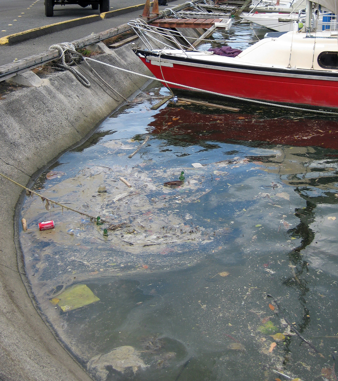 Marine debris, washed into the marina through storm drains and street runoff.