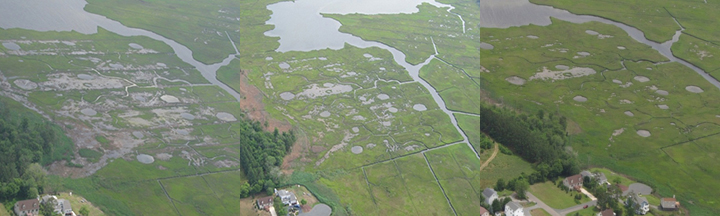 Time sequence of Slough's Gut Marsh from above showing bare patches of open water filling in with healthy marsh grass.