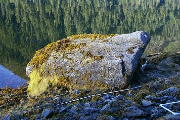 Mearns Rock boulder in rocky intertidal area.