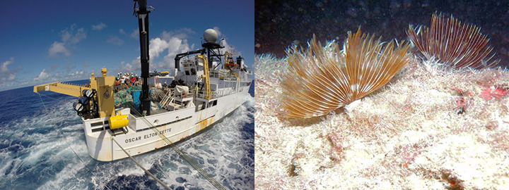 Left, NOAA Ship Oscar Elton Sette with the team and collected fishing nets aboard. Right, feather duster worm growing in the harbor of Midway Atoll.