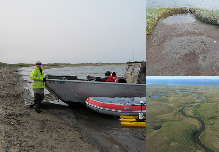 Left: People standing in and around two boats on shore. Top right: Wolf tracks in mud on a vegetated tundra shoreline. Bottom right: An aerial view of the coastline and winding waterways.