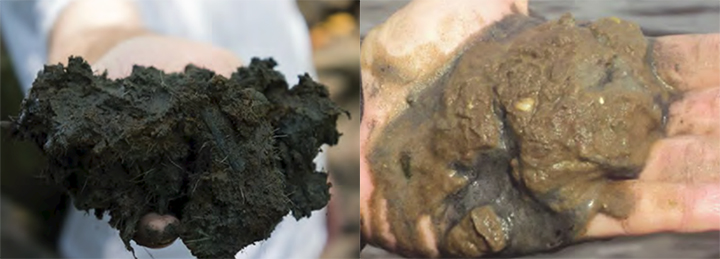 Left: Someone holding dark, carbon-rich soil. Right: Someone holding sand and clay soils.