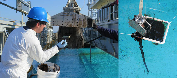 Left: A researcher applies oil from a bucket onto baleen in a clamp using a paintbrush. Right: Long baleen plates hung from a clamp are dipped through floating oil contained in a plastic ring in a salwater tank.