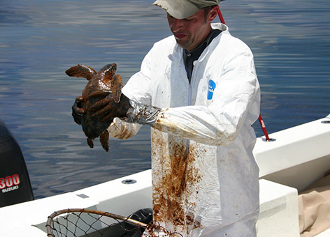 A man holding an oiled sea turtle.