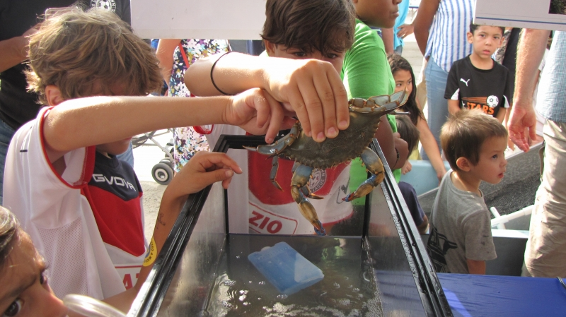 A group of kids holding a crab.